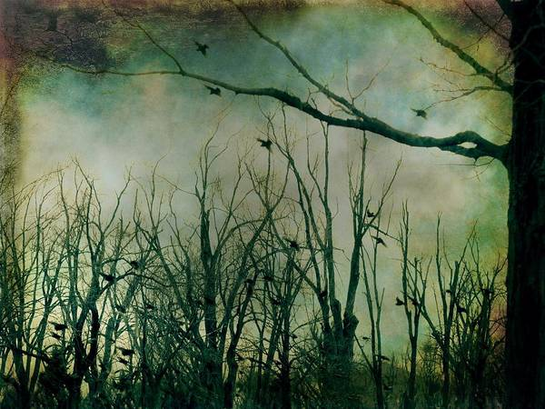 Woodland Mixed Media - As Night Apaproaches  by Gothicrow Images