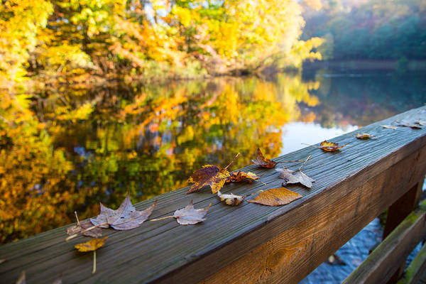Fallen Leaf Lake Photograph - As The Leaves Fall by Karol Livote