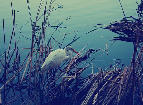 Cattails Wall Art - Photograph - As The Light Fades by Laurie Search