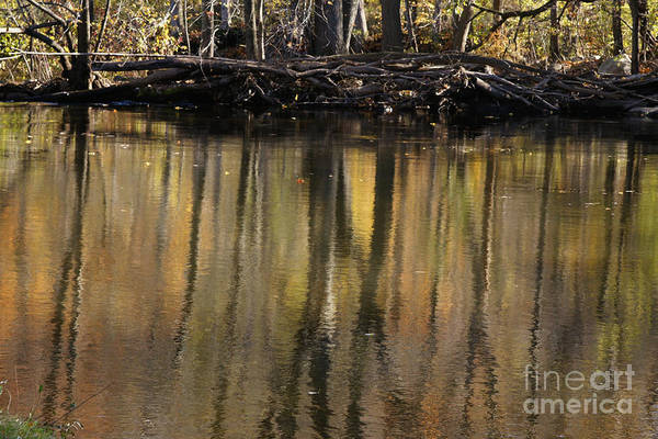 Photograph - As Through A Leafless Landscape Flows A River by Linda Shafer