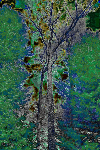 Photograph - Ascending Trees by David Patterson