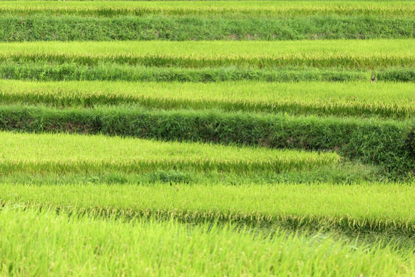 Nara Wall Art - Photograph - Asia, Japan Rice Terraces In Nara by Jaynes Gallery