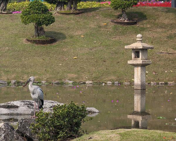 Photograph - Asian Openbill Stork Dthn0155 by Gerry Gantt