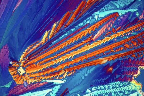 Asparagus Wall Art - Photograph - Asparagine Crystals by Steve Lowry