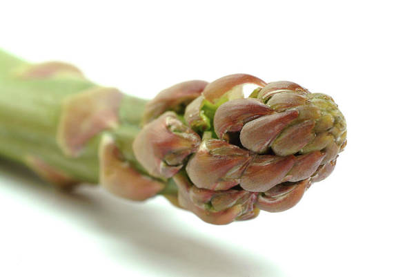 Asparagus Wall Art - Photograph - Asparagus by Bildagentur-online/th Foto/science Photo Library