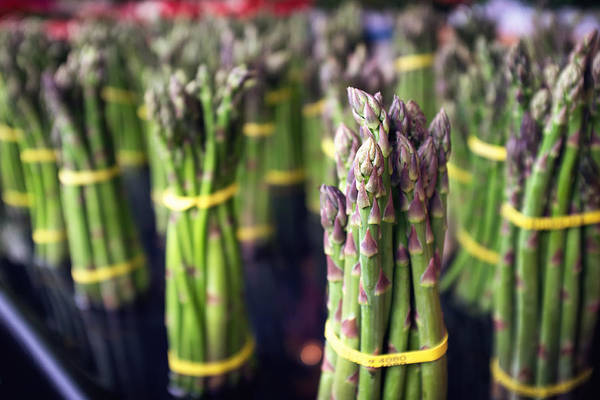Green Vegetable Photograph - Asparagus by Tanya Harrison