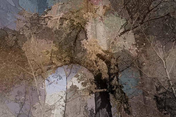 Earthtones Photograph - Aspen Abstract by Bonnie Bruno