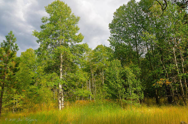 Photograph - Aspen And Others by Jim Thompson