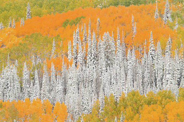 Steamboat Springs Photograph - Aspen And Pine Trees In Fall With Snow by David Epperson