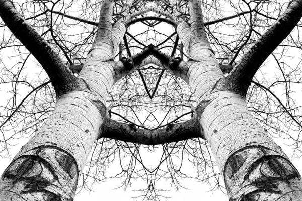 Wall Art - Photograph - Aspen Cathedral by James K. Papp