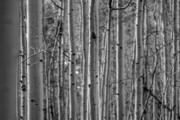 Photograph - Aspen Code by Ryan Heffron