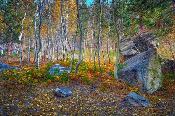 Photograph - Aspen Grove by Jim Thompson