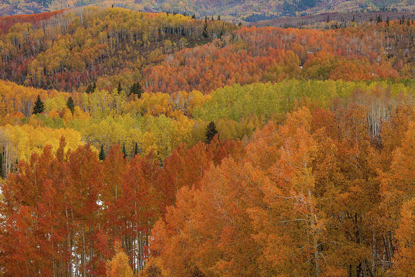 Steamboat Springs Photograph - Aspen Grove With Rainbow Of Fall by Karen Desjardin