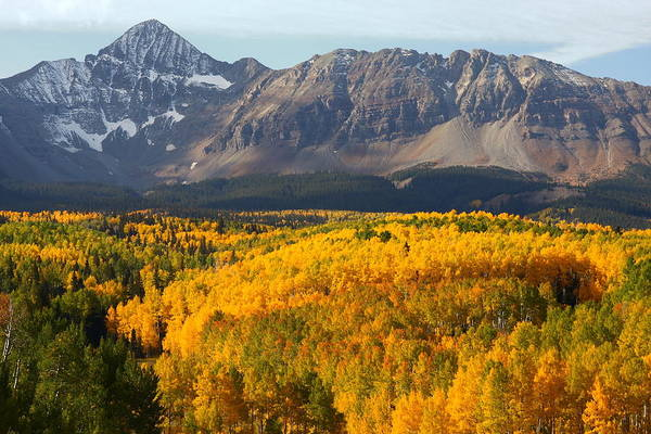 Mt. Wilson Photograph - Aspen Groves From Silver Pick Road by Jetson Nguyen