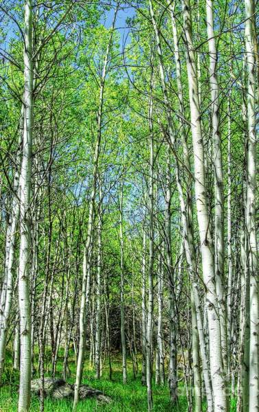 Photograph - Aspen Path by Anthony Wilkening