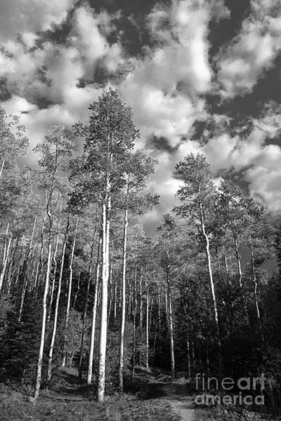 Photograph - Aspen Reach by Terry Rowe