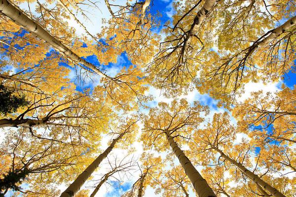Photograph - Aspen Sky by Robert Yone