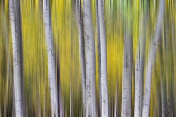 Photograph - Aspen Splendor Dreaming by James BO Insogna