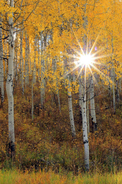 Wall Art - Photograph - Aspen Sunburst by Johnny Adolphson