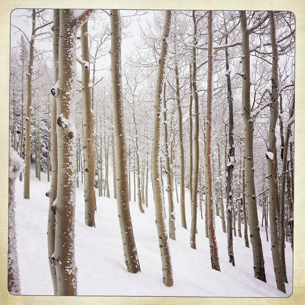 Steamboat Springs Photograph - Aspen Trees And Snow, Colorado by Karen Desjardin