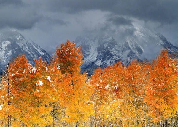 Photograph - Aspen Trees At The Oxbow Grand Teton National Park by Ed  Riche