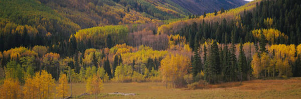 Maroon Bells Photograph - Aspen Trees In A Field, Maroon Bells by Panoramic Images