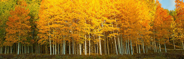 Telluride Photograph - Aspen Trees In Autumn, Last Dollar by Panoramic Images