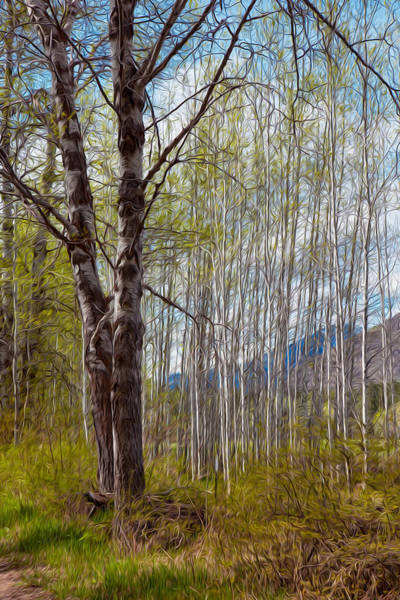 Painting - Aspen Trees Proudly Standing by Omaste Witkowski