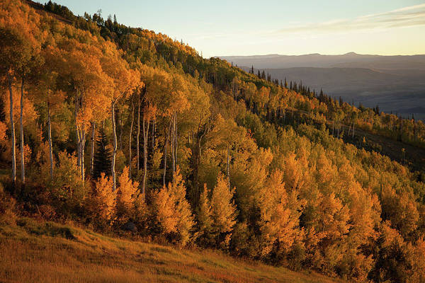 Steamboat Springs Photograph - Aspen Trees With Fall Colors At Dusk by Karen Desjardin