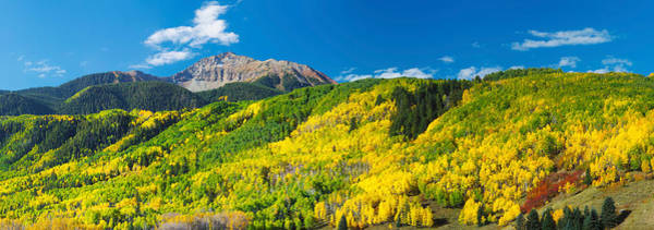 Telluride Photograph - Aspen Trees With Mountain by Panoramic Images