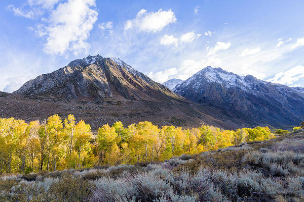 Photograph - Aspens Aglow In The Eastern Sierra  by Priya Ghose