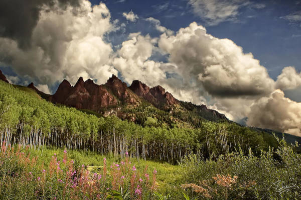 Photograph - Aspens And Wildflowers by Endre Balogh