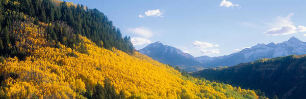 Escarpment Photograph - Aspens In Autumn In San Juan National by Panoramic Images
