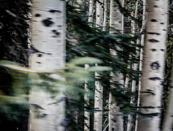 Photograph - Aspens In Motion by Karen Saunders
