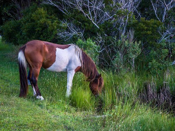 Photograph - Assateague Island Pony by Louis Dallara