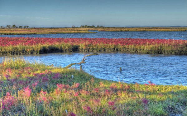 Asseteague Island Salt Marsh Art Print