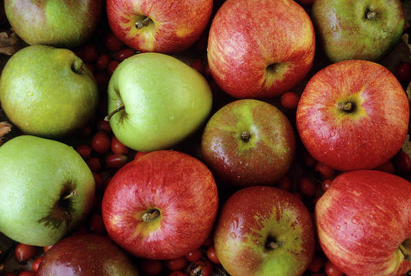 Red Delicious Apple Photograph - Assorted Apples by Ann Pickford/science Photo Library