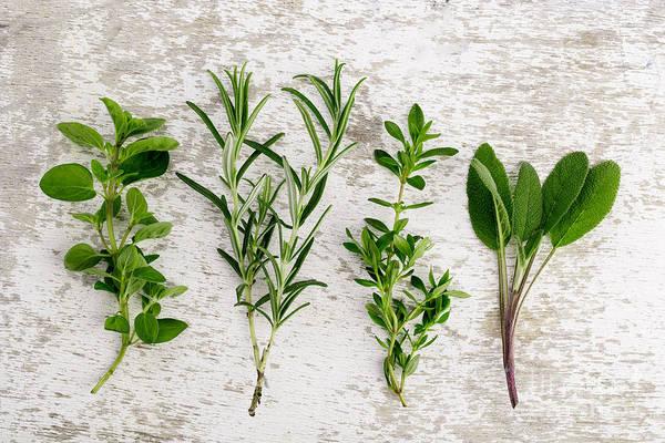 Cotton Photograph - Assorted Fresh Herbs by Nailia Schwarz