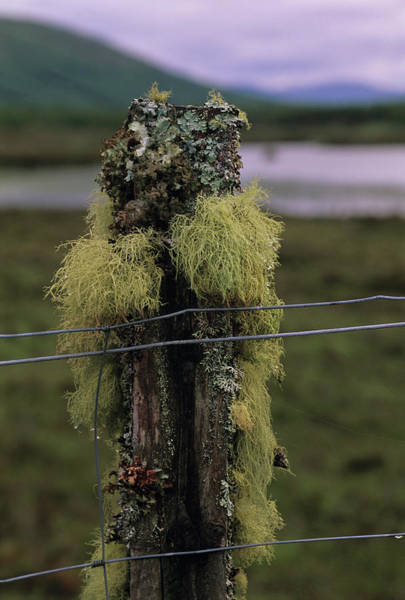 Lichens Photograph - Assorted Lichens by Duncan Shaw/science Photo Library