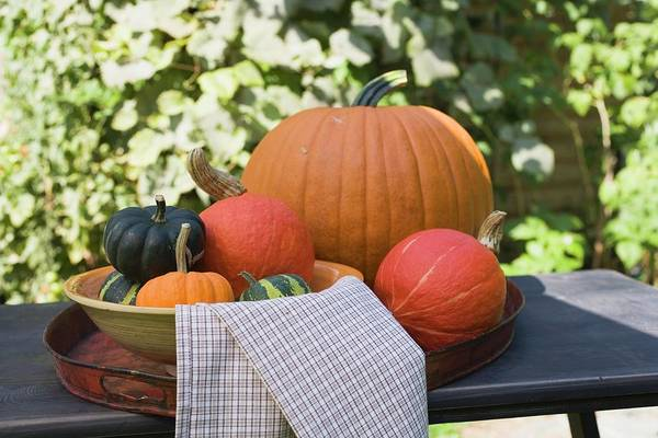 Cucurbits Photograph - Assorted Squashes And Pumpkins On Table In The Open Air by Foodcollection