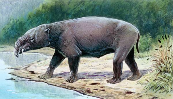 Ungulate Wall Art - Photograph - Astrapotherium by Michael Long/science Photo Library