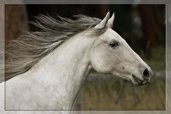 Photograph - At A Full Gallop by Wes and Dotty Weber