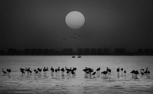 Sea Bird Photograph - At A Glance by Ahmed Thabet