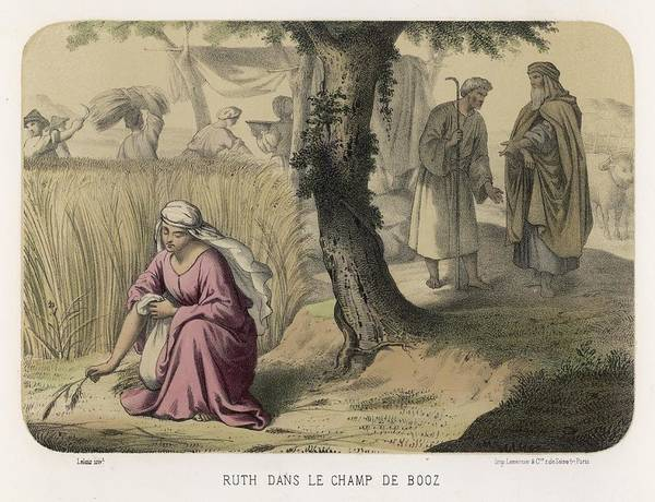Bethlehem Drawing - At Bethlehem, The Widowed Ruth by Mary Evans Picture Library