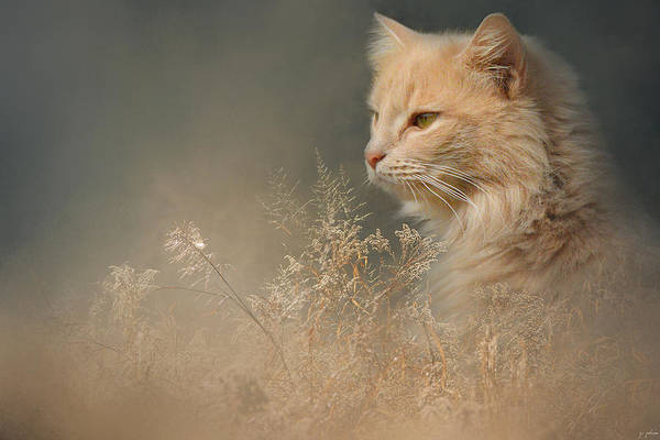 Orange Tabby Photograph - At Dawn by Jai Johnson