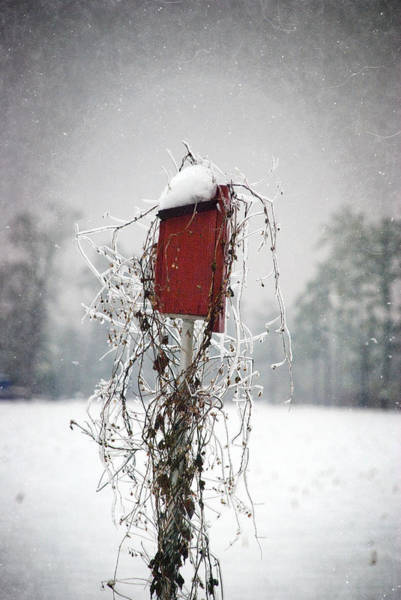 Photograph - At Home In The Snow by Beverly Stapleton