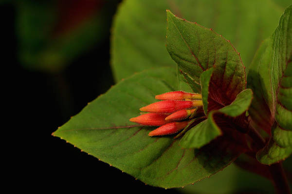 Macro Wall Art - Photograph - At Rest by Kathi Isserman