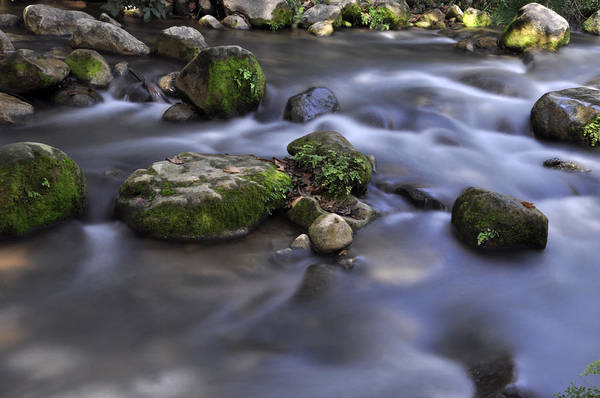 Photograph - At The Banias River 1 by Dubi Roman