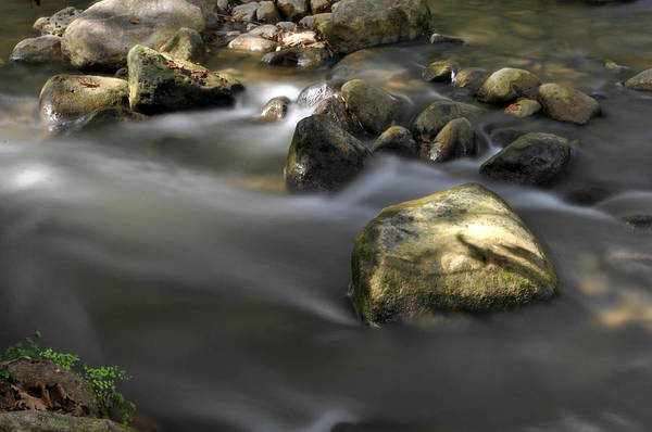 Photograph - At The Banias River 2 by Dubi Roman