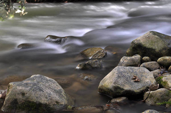 Photograph - At The Banias River 3 by Dubi Roman